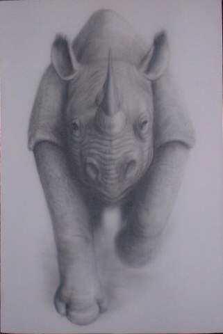 rhino-50